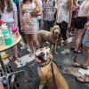 20140713-2-293-Falgerho-Bastille-Day-Brooklyn